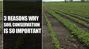 3 Reasons Why Soil Conservation Is So Important